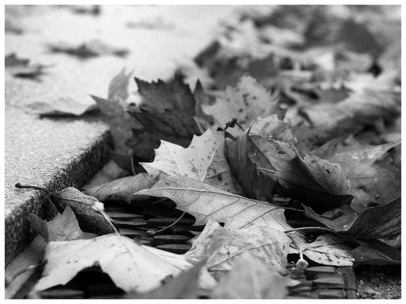 autumn-sw_