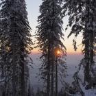 Dreisessel/Winter 2015