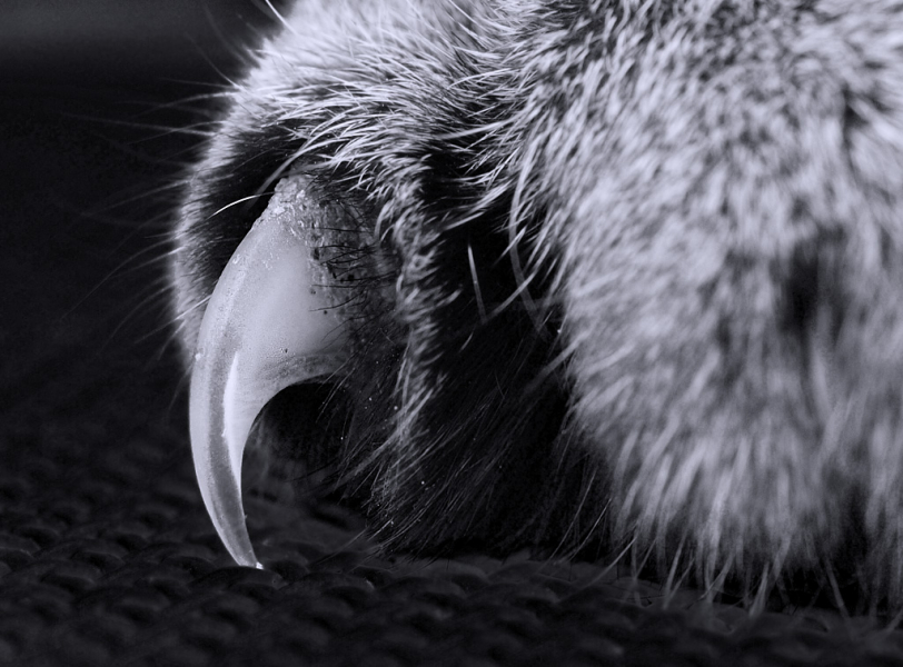 Katzenkralle